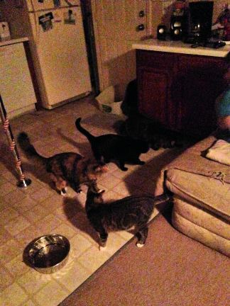 Lizzi's cats: Hillary, Haley, Itty and Snot