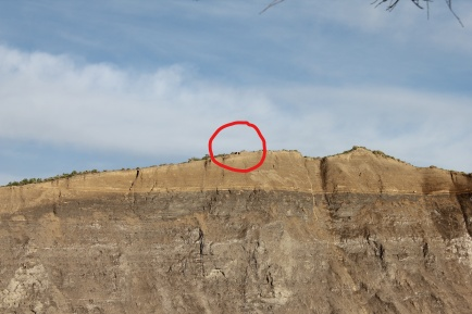 Pair of bald eagles pearched on cliff