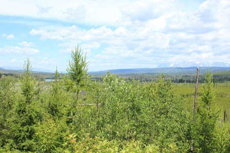View from Forest and Fire Trail