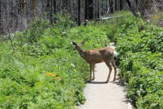 Deer we met on trail