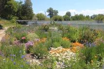 Ranch house garden