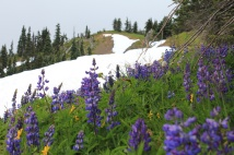 Wildflowers from summit