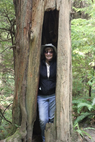 Jan in hollow tree