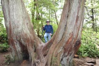 Phil in split tree