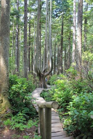 Cape Flattery Trail
