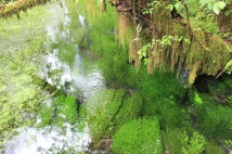 Clear water stream in rain forest