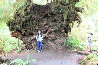 Jan by huge root ball of fallen tree
