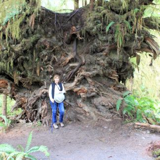 Jan by huge root ball of fallen tree