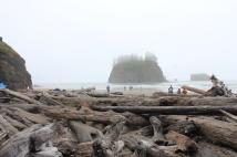 Driftwood along Second Beach