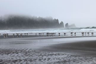 Seagull convention