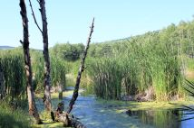 Wetlands on Hummocks Trail