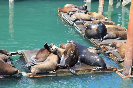 Sea lions trying to sleep