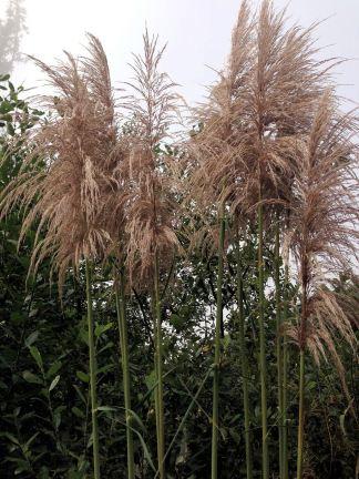 Plants along Hwy. 101
