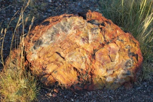 Petrified log at Rainbow Forest Museum