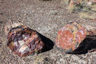 Colorful petrified logs along Long Log Trail