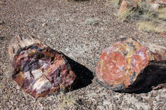 Colorful petrified logs along Long Log Trail