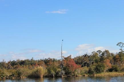 Eagle perched above marina