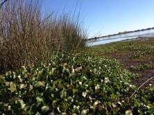 View from Alligator Marsh Boardwalk