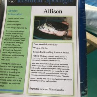 Allison sign