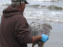 Turtle release 2