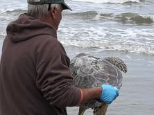 Turtle release 2