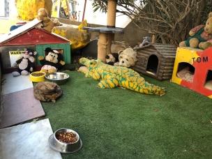 Cat napping at Cat Village