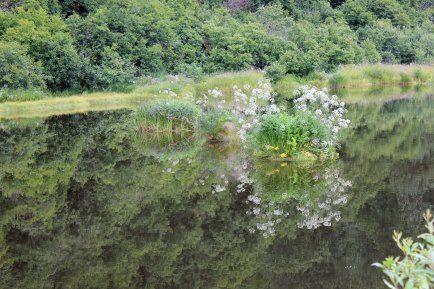 Reflections in pond near Crooked Creek