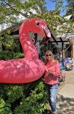 Jan and flamingo
