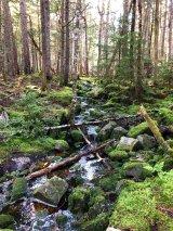 Stream along trail