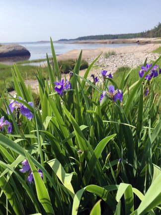 Flowers along shoreline