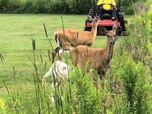 Deer along Van Horne Trail