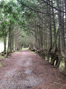 Carriage trail to Covenhoven