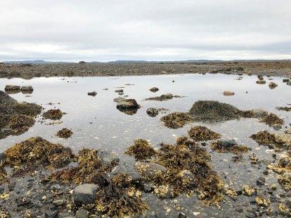 Tidal pool at beach by Pagan Point