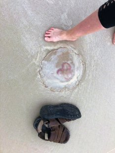 Jan's foot next to large jellyfish