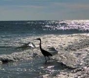 Crane in the tide