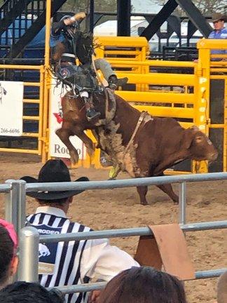 Ececting bull rider