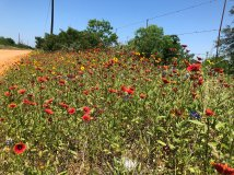 Wildflowers along the road