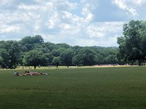 Open field at Zilker Park
